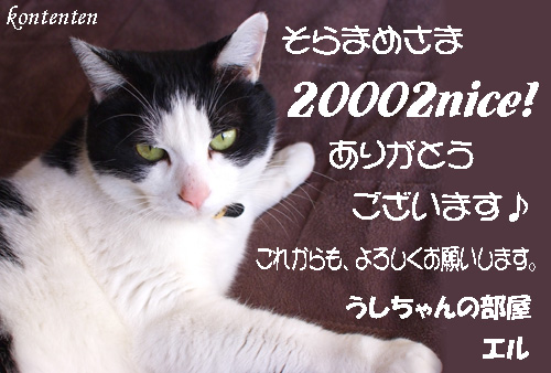 so-net62284.jpg
