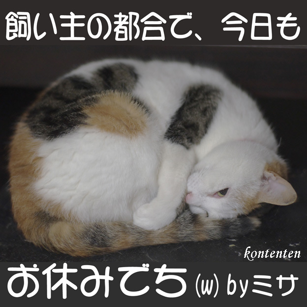 so-net6233107.jpg