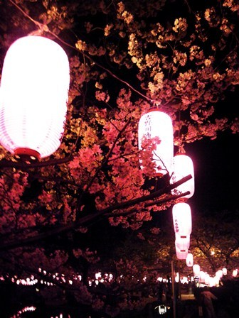 櫻2012 (1).JPG
