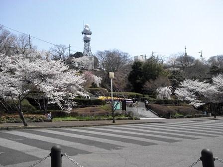 櫻2012 (3).JPG