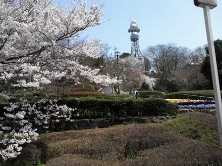 櫻2012 (4).JPG
