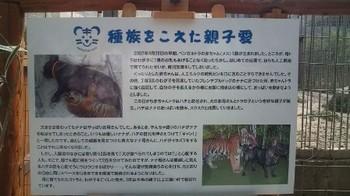 白鳥動物園 103.jpg