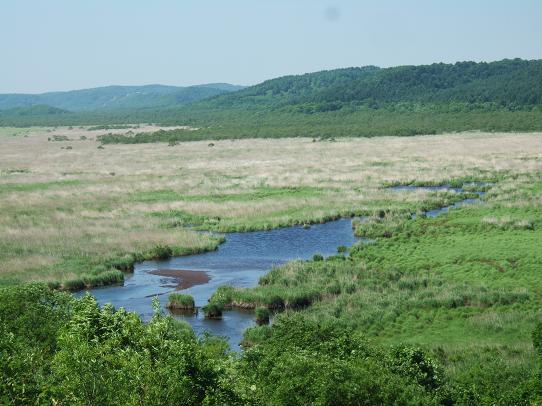 湿原4.JPG