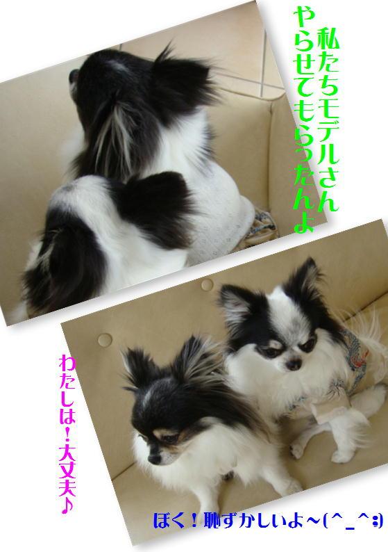 Imari&Max.JPG
