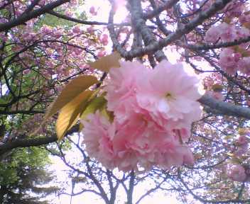 2008_0415_387.jpg
