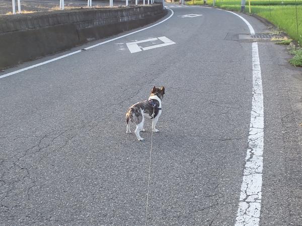 散歩0003.JPG