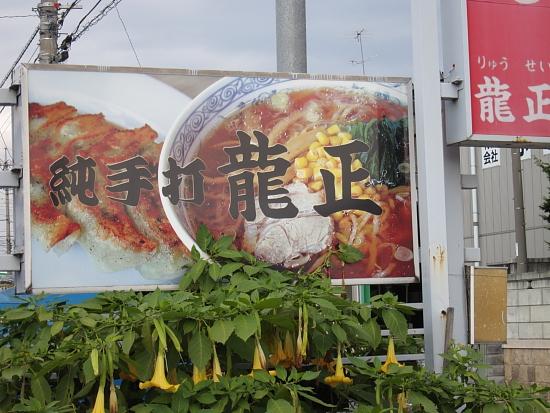 龍正-1.JPG