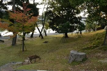 興福寺 (3).JPG