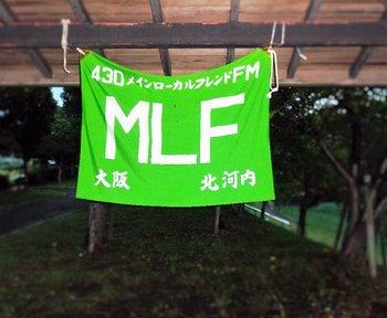 MLF.JPG