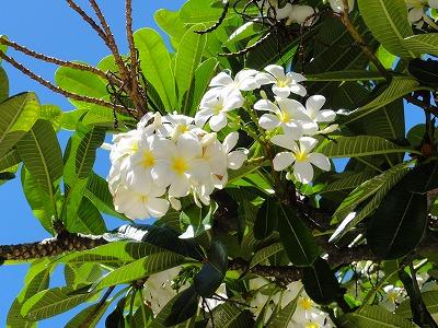 hawaii4 182.jpg
