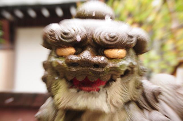 15白山神社狛犬.jpg