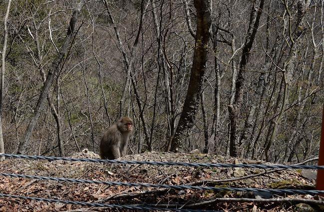 8おっとお猿さん発見!!.jpg