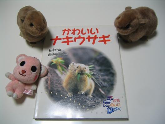かわいいナキウサギ.jpg