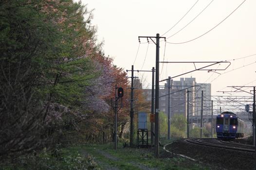 厚別鉄道林01.jpg