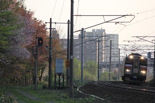 厚別鉄道林02.jpg