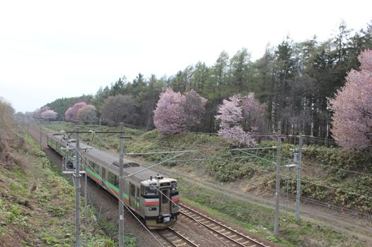 大麻鉄道林04.jpg