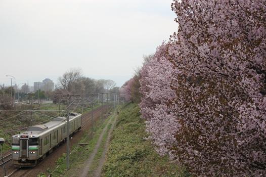 大麻鉄道林05.jpg
