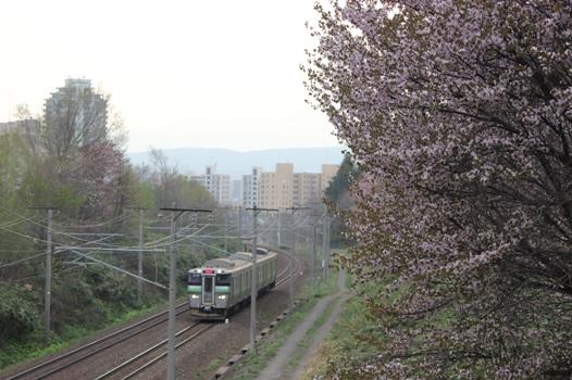 大麻鉄道林07.jpg