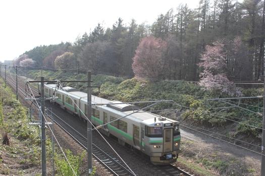大麻鉄道林の桜と普通列車01.jpg