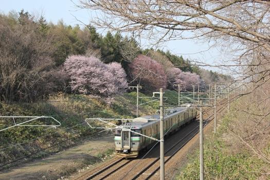 大麻鉄道林の桜と普通列車02.jpg