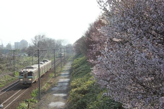 大麻鉄道林の桜と普通列車04.jpg