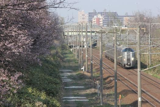 大麻鉄道林の桜と普通列車05.jpg