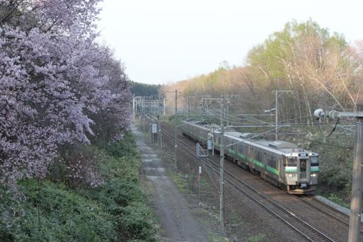 大麻鉄道林の桜と普通列車09.jpg
