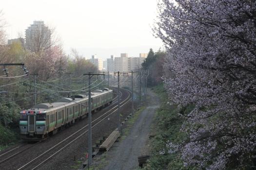 大麻鉄道林の桜と普通列車10.jpg