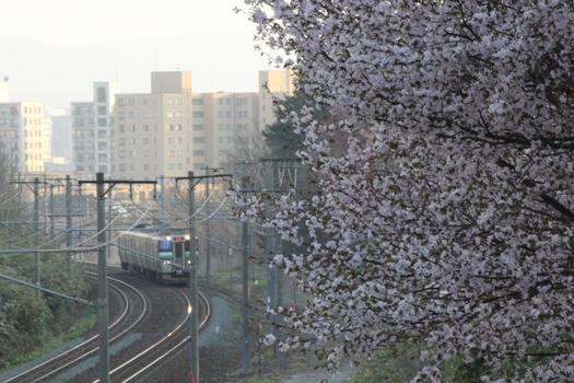 大麻鉄道林の桜と普通列車11.jpg