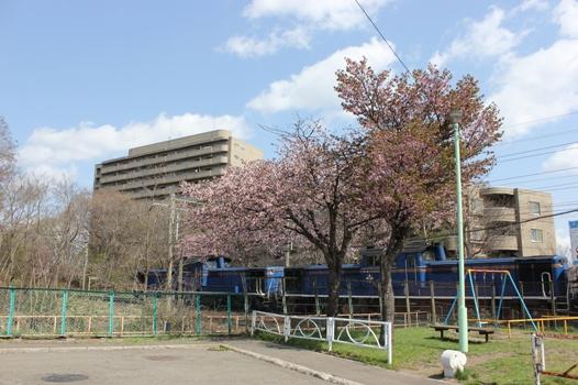桜とトワイライトエクスプレス01.jpg