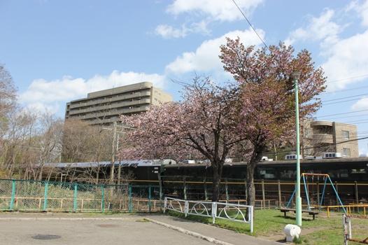 桜とトワイライトエクスプレス02.jpg