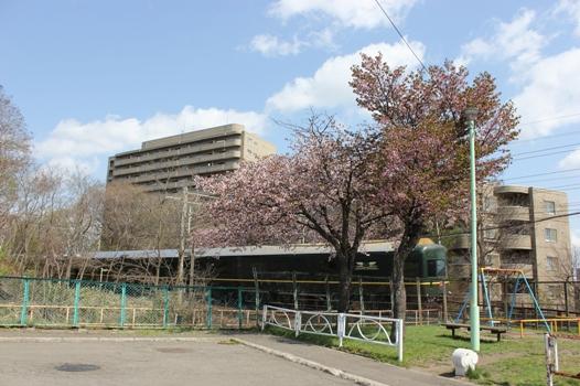 桜とトワイライトエクスプレス03.jpg