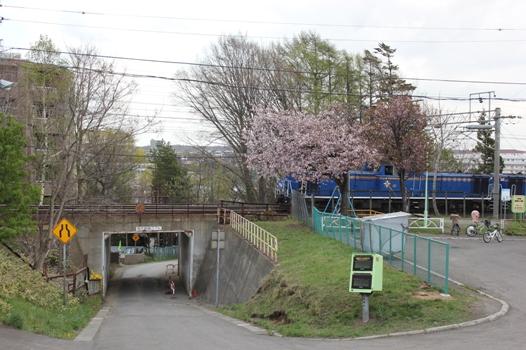 桜と北斗星01.jpg