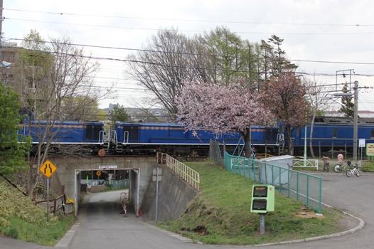 桜と北斗星02.jpg