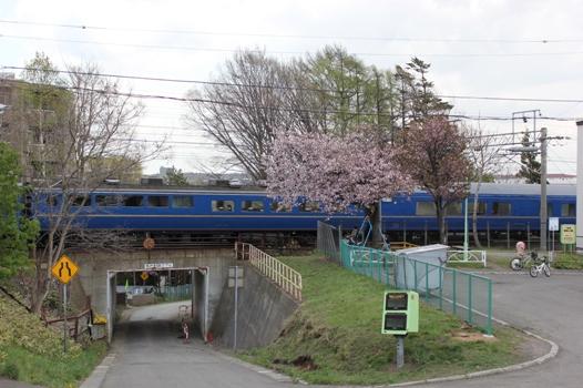 桜と北斗星03.jpg