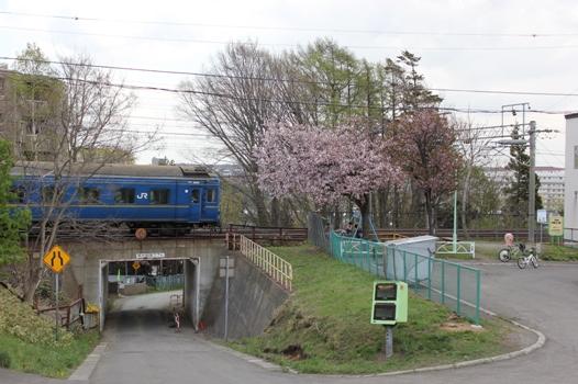 桜と北斗星04.jpg