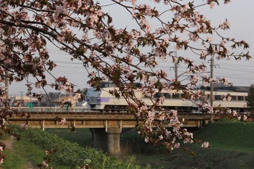 森林公園駅の桜とオホーツク.jpg