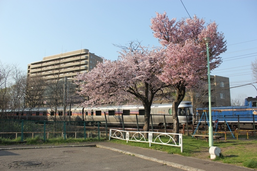 青葉台公園の桜とカシオペア02.jpg