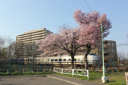 青葉台公園の桜と快速エアポート01.jpg