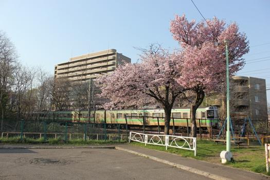 青葉台公園の桜と快速エアポート02.jpg