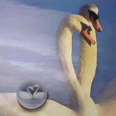 cameo_swans_1.jpg