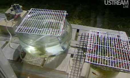 Sola-air-pump20100913.jpg