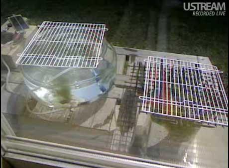 solar-air-pump.jpg