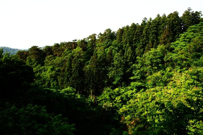 A春日山09.JPG