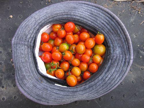 tomato2011owarikata.jpg