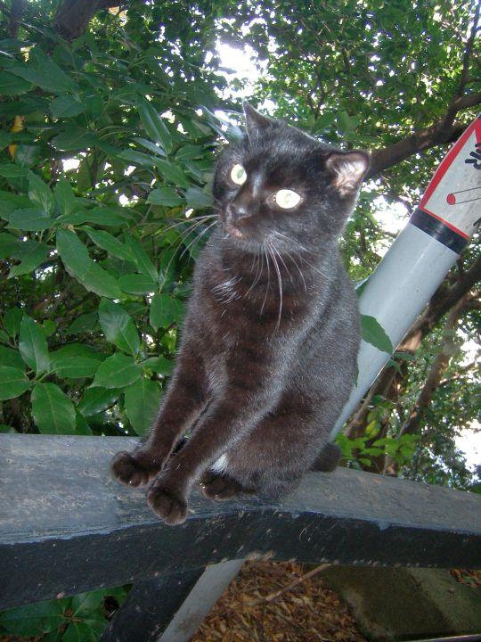 猫写真16