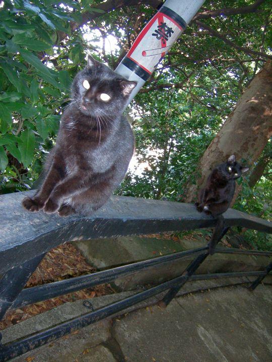 猫写真17
