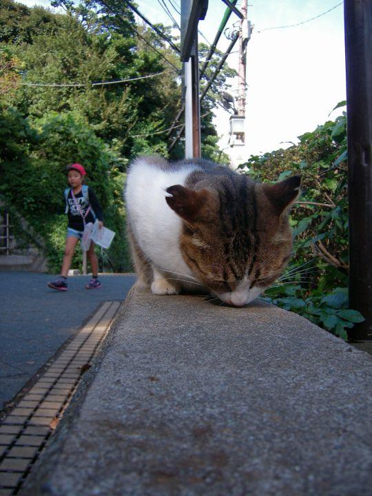 猫写真18
