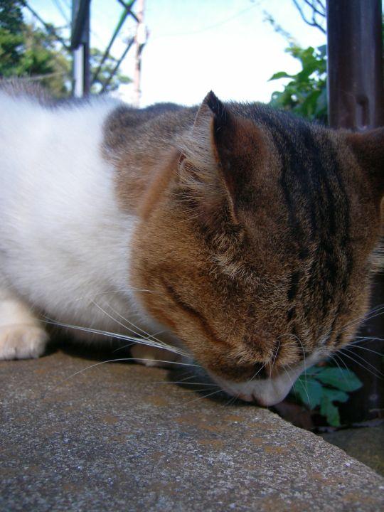 猫写真19