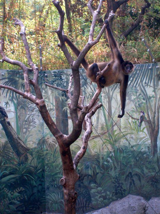 自然動物園62
